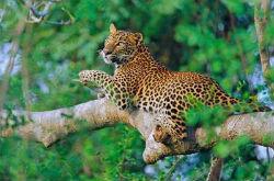 Шри-Ланка: парк Ялла, как кусочек первозданности природы
